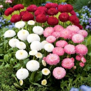 świat kwiatów nasiona